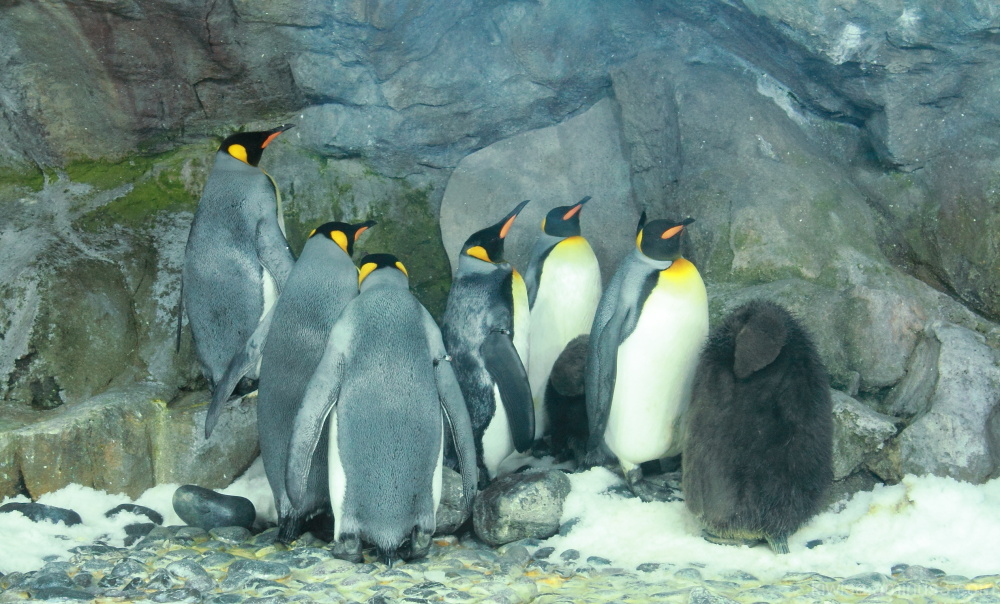 Penguin huddle