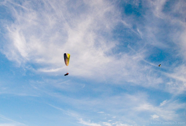 Paraglider and seagull