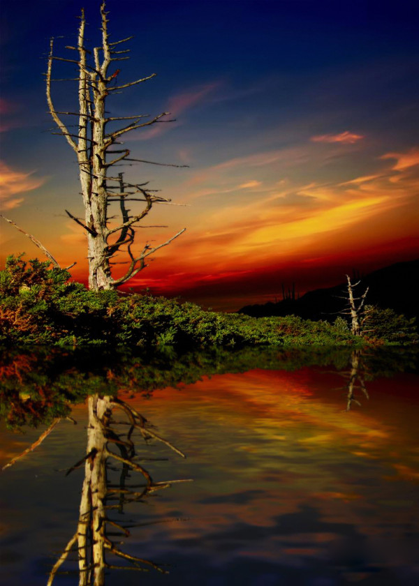old dead tree reflection