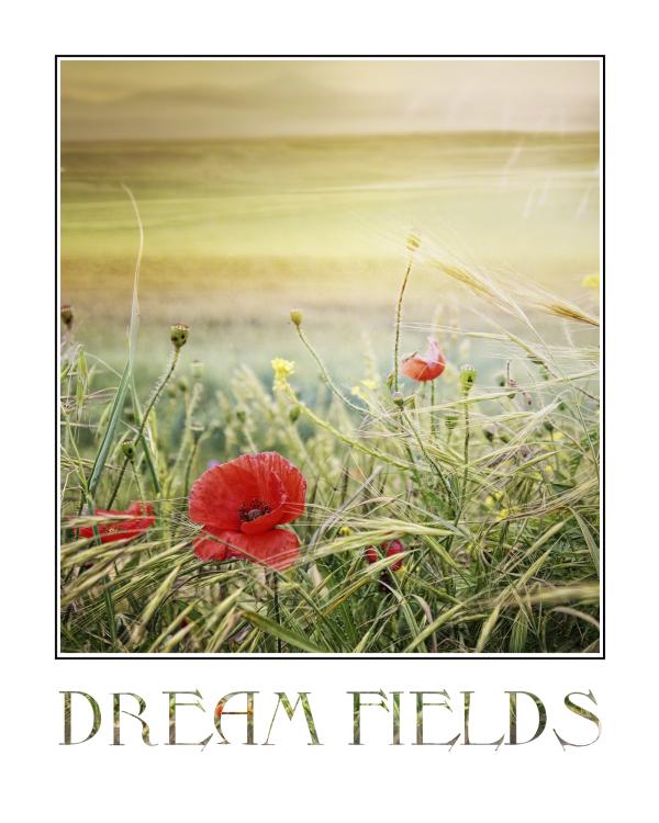 Castilian fields with poppies