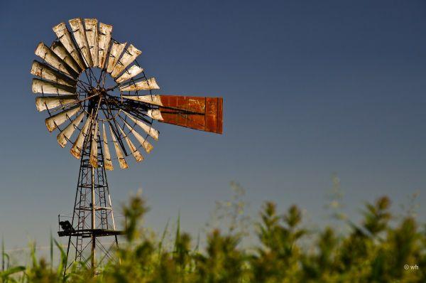 Windmolen,  Windmill