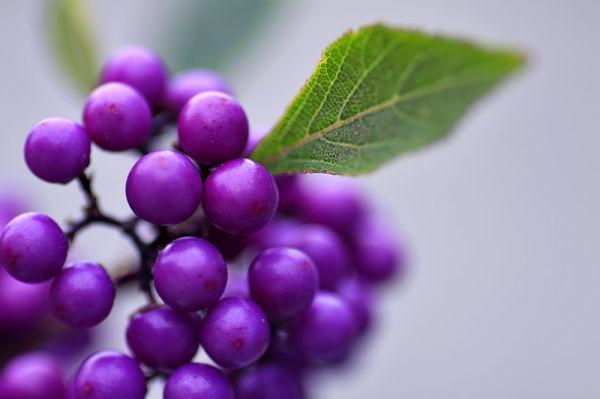 "Purple ""rain"""
