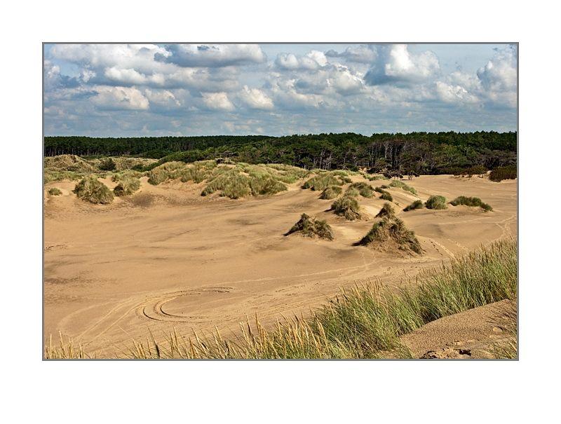 sand & woodland
