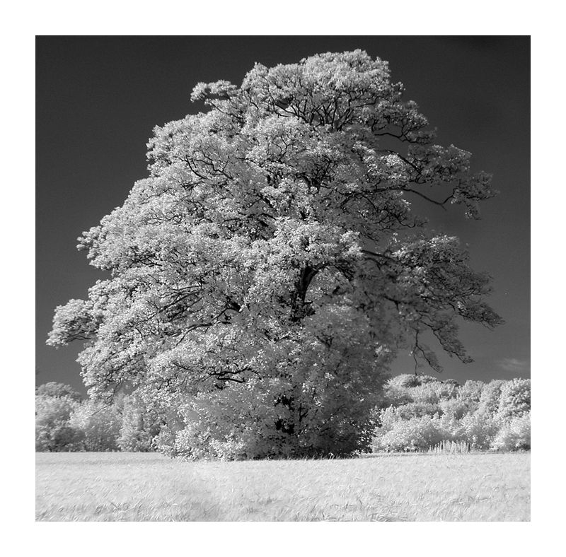 IR / The Tree