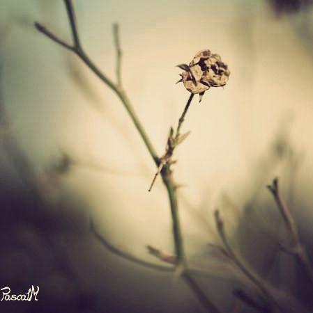 nature morte......