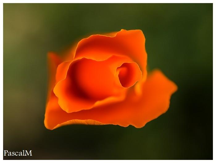 Orange tones