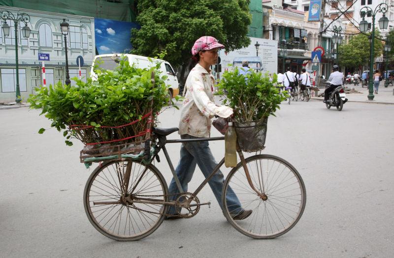Marchande dans les rues d'Hanoi