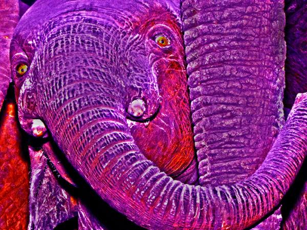 Wonderland Baby Elephant