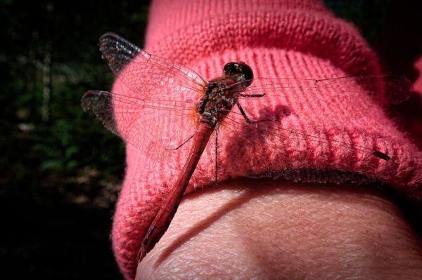 Dragonfly visiting