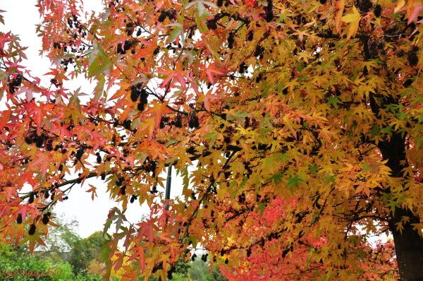 Toward Autumn  7