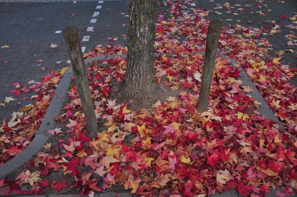 Toward Autumn 13
