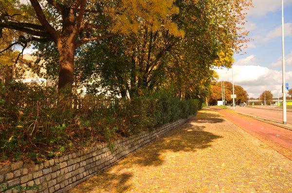 Toward Autumn 16