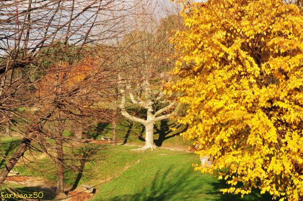 Toward Autumn 20