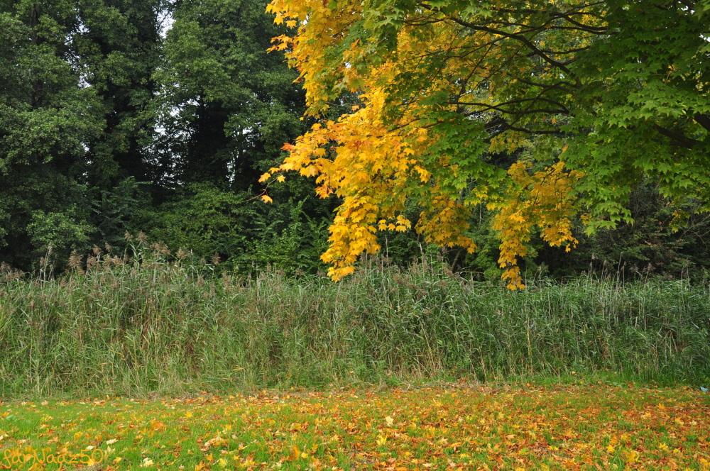 Toward Autumn 24