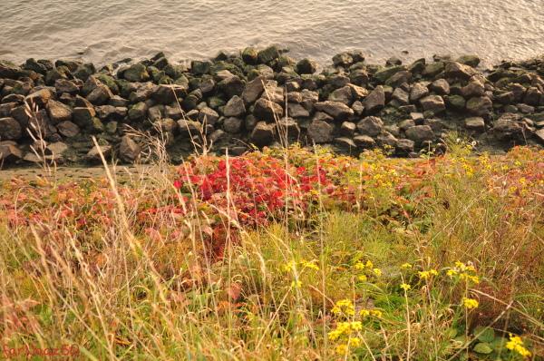 Toward Autumn 25