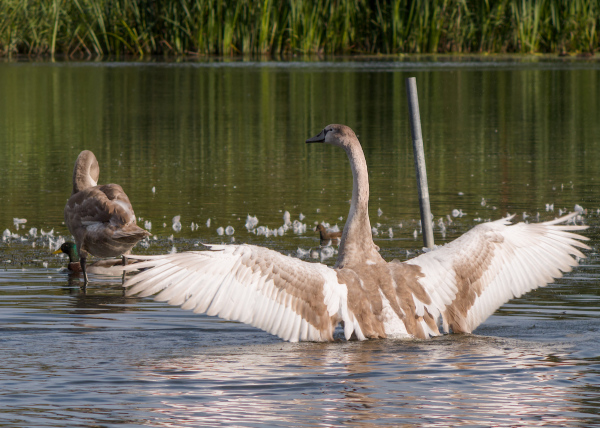Moulting Two
