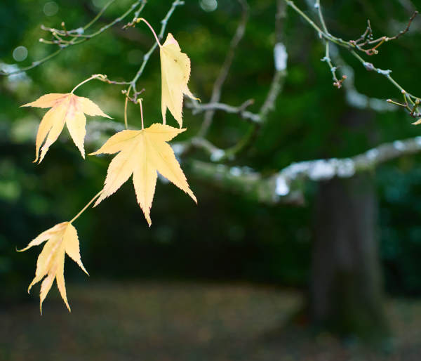Leaf and Lichen 5