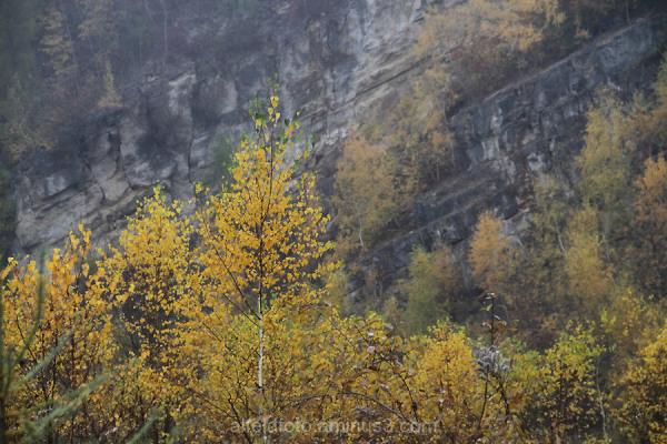 Herbstimpression Steinberg, Delligsen