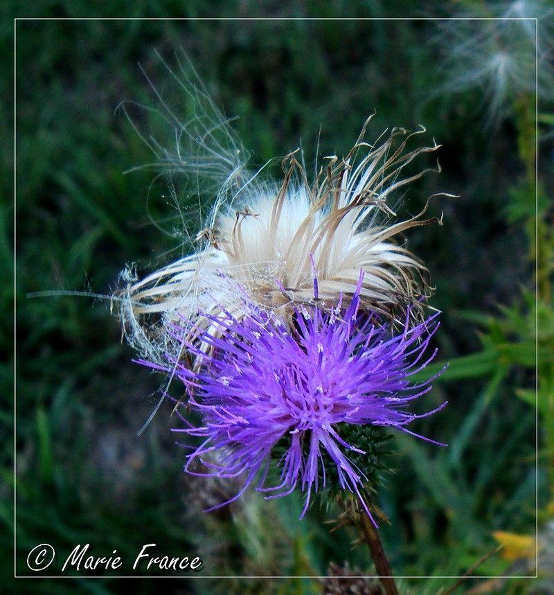 fleurs et graines