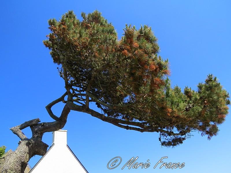 arbre original