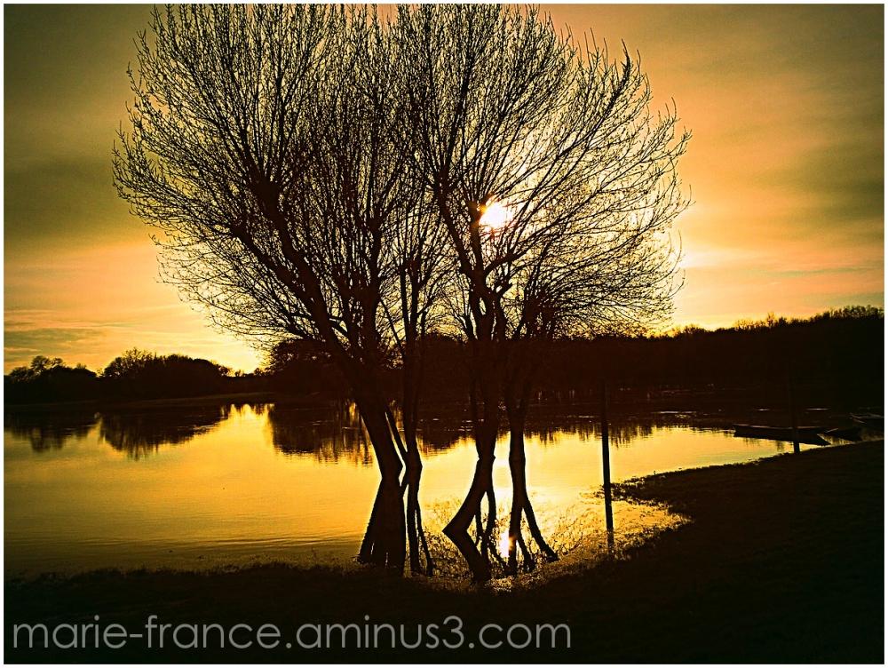 arbre, paysage