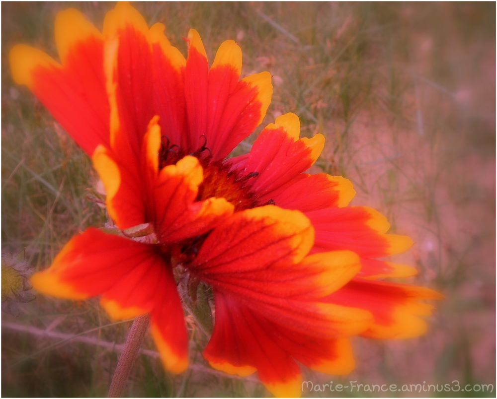 fleur dans un environnement flouté