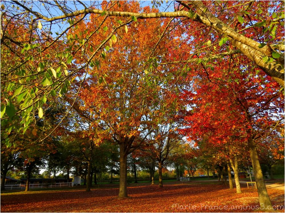 Au parc de l'Isle Briand au Lion d'Angers