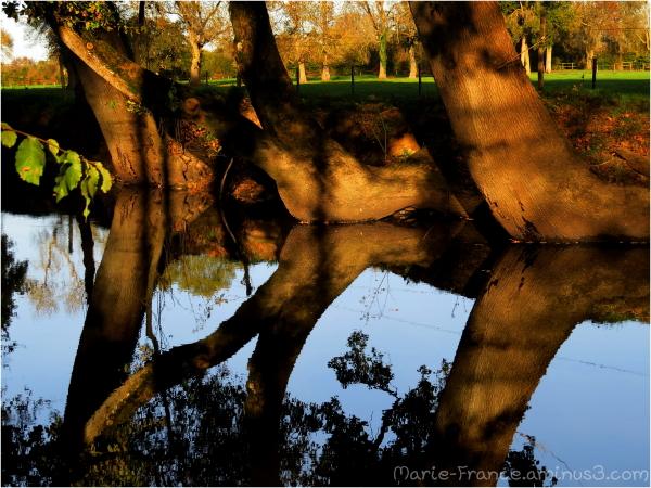 reflets de troncs d'arbres au Lion d'Angers