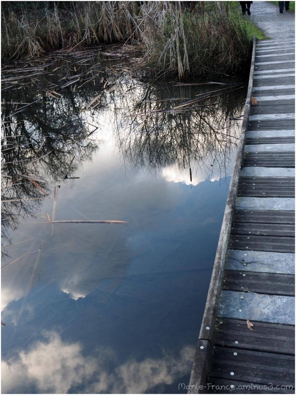 reflets pris d'une passerelle sur des marais Anjou