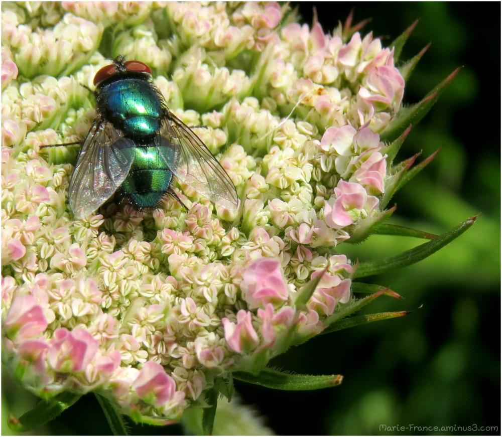 mouche verte sur une fleur