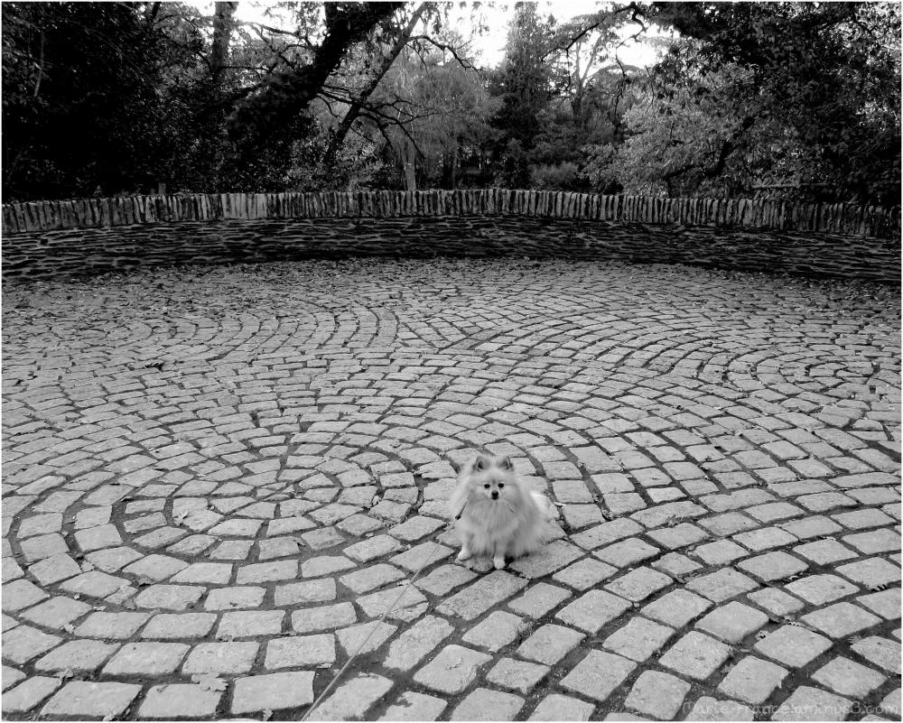 chien dans un square