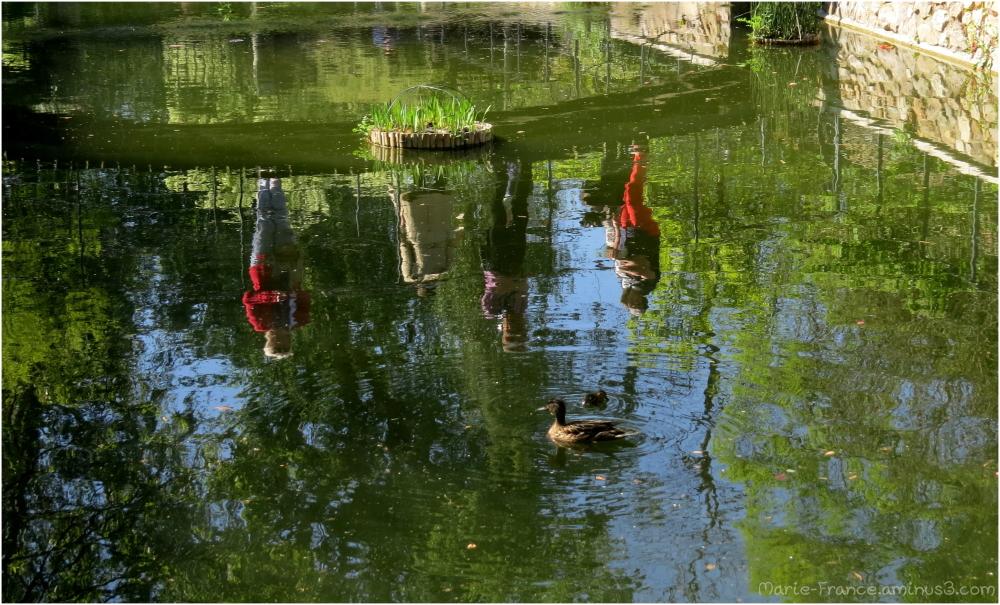 Des canards et des reflets