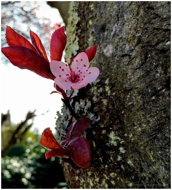 une fleur sur un tronc