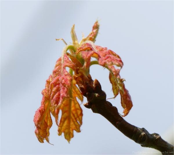 feuillages de printemps