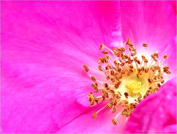 intérieur de fleur