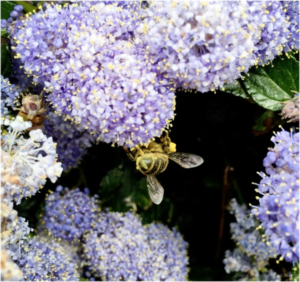un insecte dans les fleurs