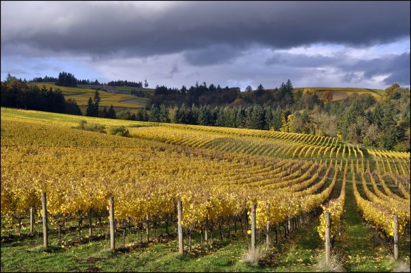 wineries fall dundee