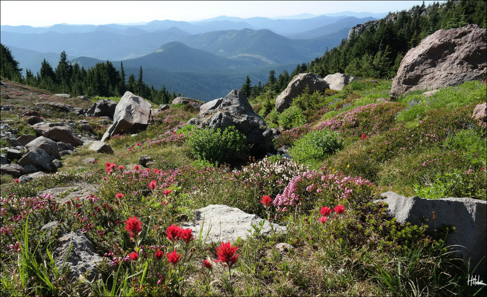 meadows and mountains