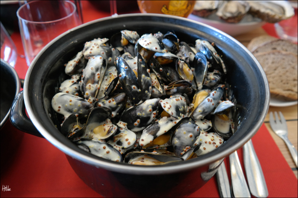 mussles in Dijon