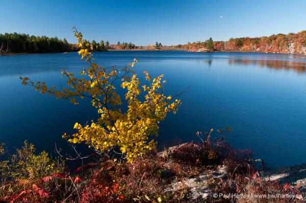 small maple tree near a lake in autumn