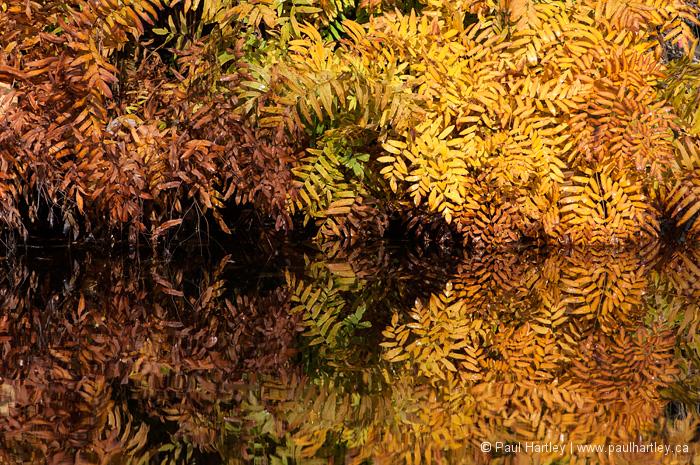 Fern in autumn