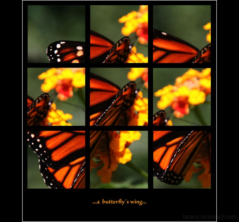 ...a butterfly´s wing...
