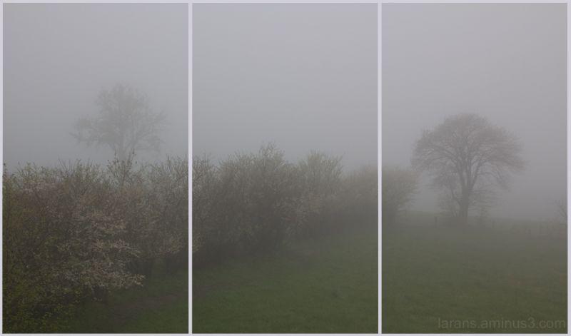 ...misty landscape...