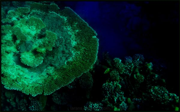 ...green corals and the deep blue...