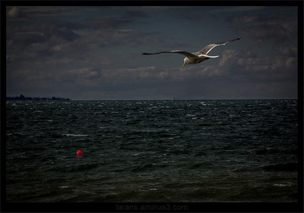 ...over the rough sea...