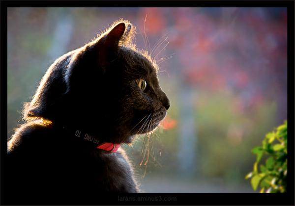 ...katt i skånskt fönster...