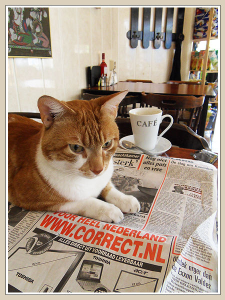 The Cat And The Coffee Break