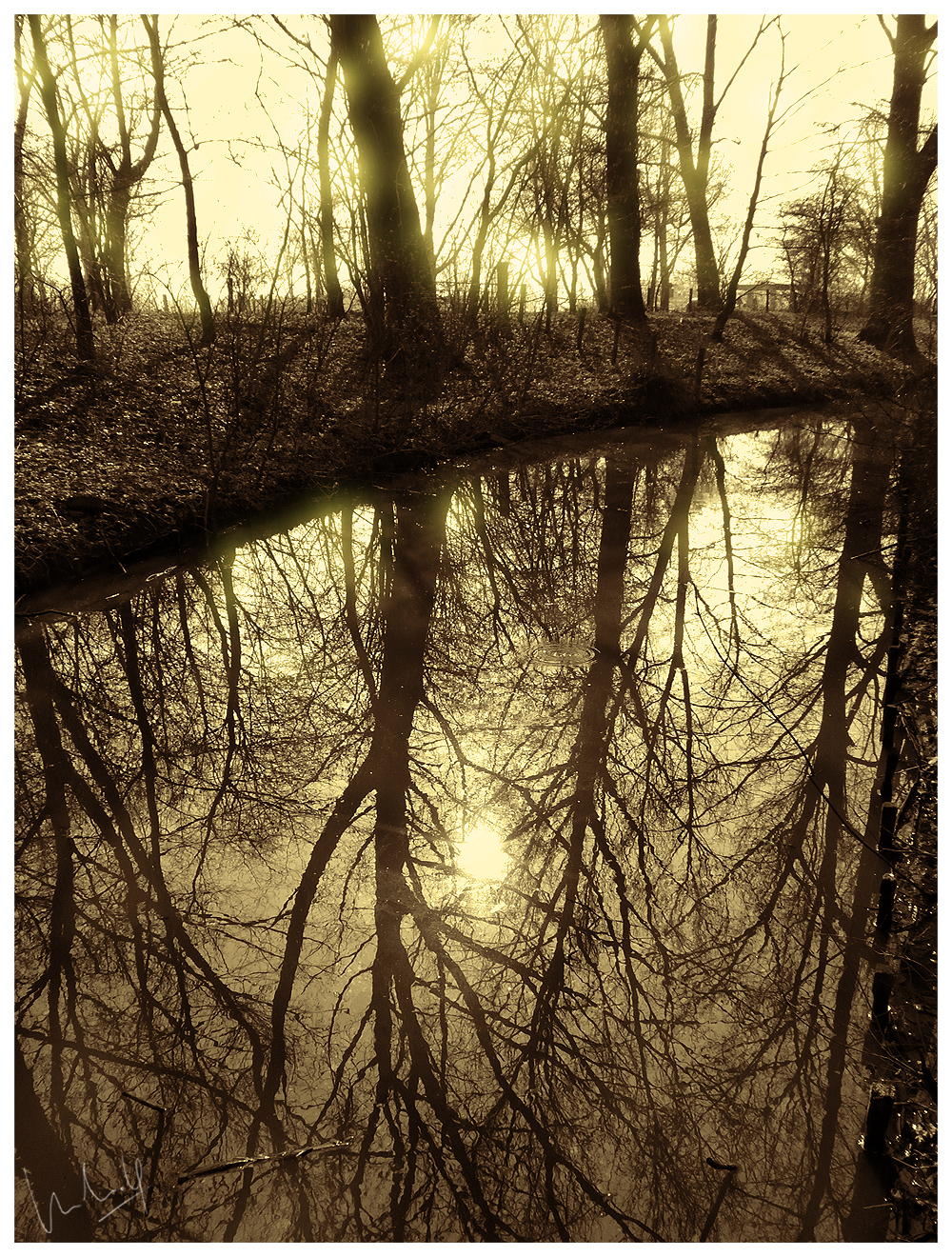 Sun, Water, Trees & Reflections