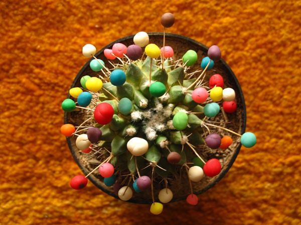 cactus decorated with colorful playing dough