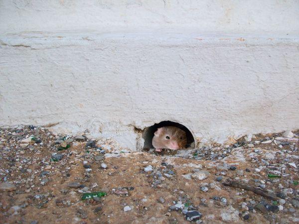cache toi le chat est par là!!